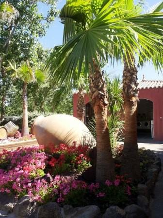 nouville palm