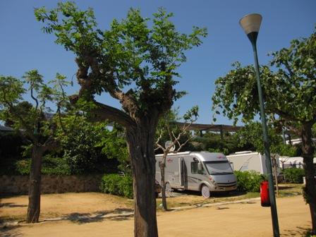 träd1