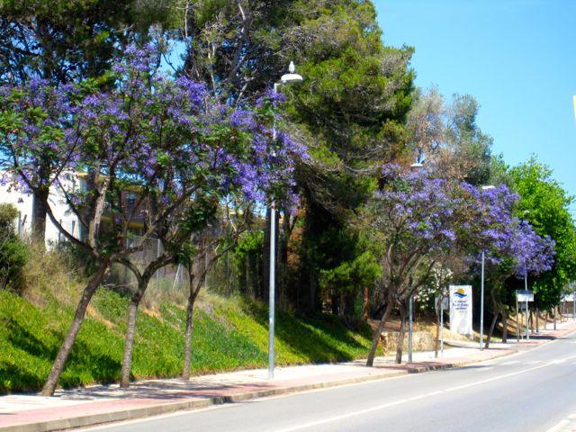 blåa träd