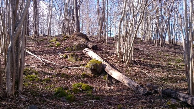 skogsbacken